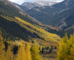 Leaf Colors Explained: Green, Yellow, …Blue?